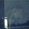 Sofer de autobuz romanesc filmat in timp ce vorbea la telefon