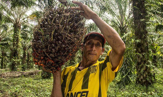 Uleiul de palmier